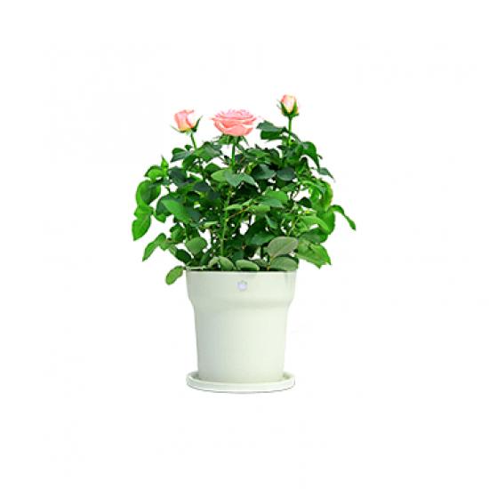 Chậu trồng cây trồng hoa thông minh Xiaomi